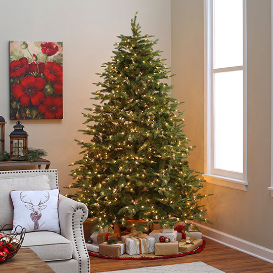 CCF Christmas Trees - 6'6''/8ft - St Dunstans College - CCF Christmas Trees - 6'6''/8ft